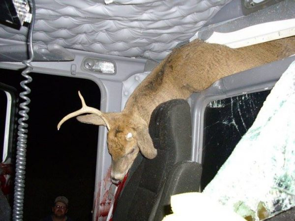 PHOTOS: Trucker and 10 year old son lucky to survive grisly collision with deer